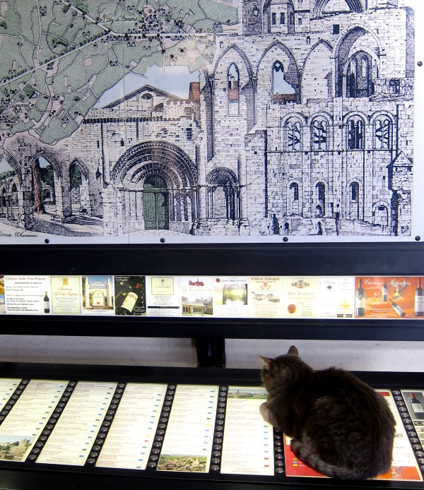 Kitty kat at a visitors' center in Saint Emilion