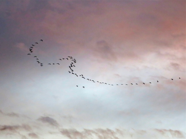 Novmber sky above the Gironde estuary